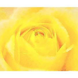 Art Dreams - Yellow Rose