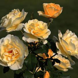 Rosanne Jordan - Yellow Rose Bouquet of Love