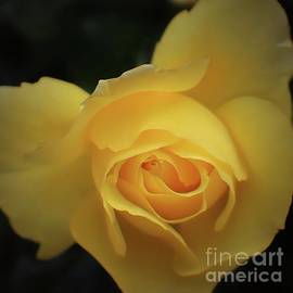 Ella Kaye Dickey - Yellow Rose Garden two