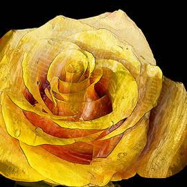 Ronald Bolokofsky - Yellow Rose
