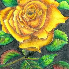 Tara Krishna - Yellow rose