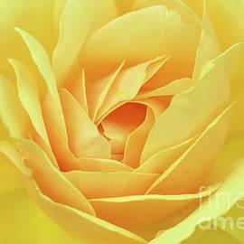 Yellow Rose Unfurling by Regina Geoghan