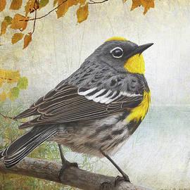 R christopher Vest - Yellow Rumped Warbler Portrait