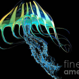 Yellow Striped Jellyfish by Corey Ford