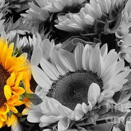 Yellow Sunflower on Black and White by Dora Sofia Caputo Photographic Design and Fine Art