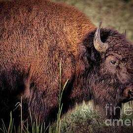 Janice Rae Pariza - Yellowstone Wildlife