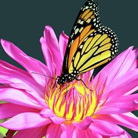 Debra Orlean - You Are My Monarch