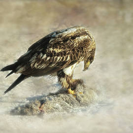 Susan Capuano - Young Eagle