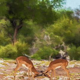 Liz Leyden - Young male Impalas sparring
