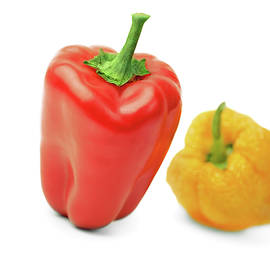 Young red and old yellow peppers on  white background.       by Yurii Agibalov