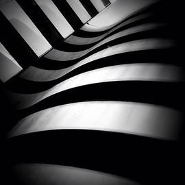 Zebra City - Concrete Jungle