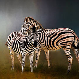 Maria Coulson - Zebra Pair