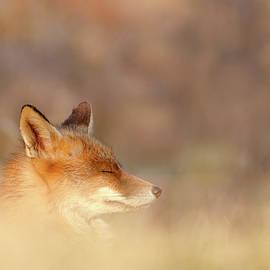 Roeselien Raimond - Zen Fox Series - Dream Fox