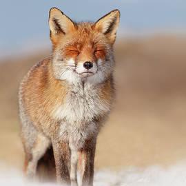 Roeselien Raimond - Zen Fox Series- Smiling Fox in the Snow