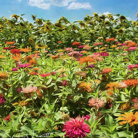Zinnias And Sunflowers by Erika Fawcett
