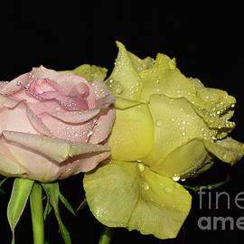 001-beautiful Roses by Elvira Ladocki
