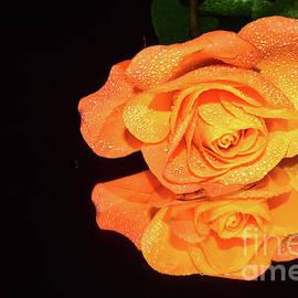 079-beautiful Rose by Elvira Ladocki