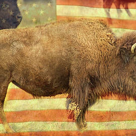 American Buffalo by James BO Insogna