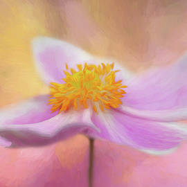 Anemone by Cyndy Doty