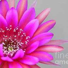 Antimatter Cactus flower  by Bryan Keil