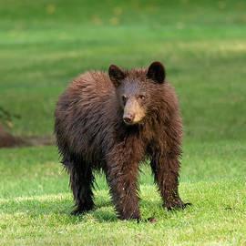 Baby Bear  by Mike Dawson