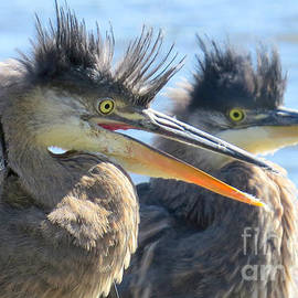 Bad hair day by Frank Townsley