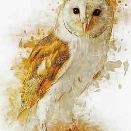 Ian Mitchell - Barn Owl