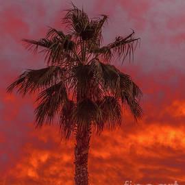 Beautiful Palm Tree Silhouette by Robert Bales