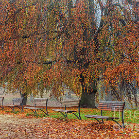 Benches in autumn park by Patricia Hofmeester