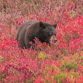 Berries For The Bear by E Faithe Lester