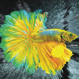 Betta Fish by Mariecor Agravante