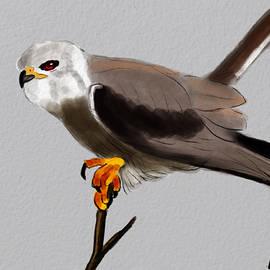 Bird Of Prey by Michael Kallstrom