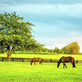 Bluegrass pasture by Alexey Stiop
