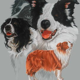 Border Collie Revamp by Barbara Keith