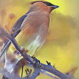 Cedar Waxwing by Marcia Colelli