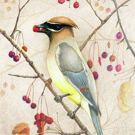 Cedar Waxwing by Marilyn Smith