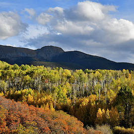 Colorado Fall Colors by Ray Mathis