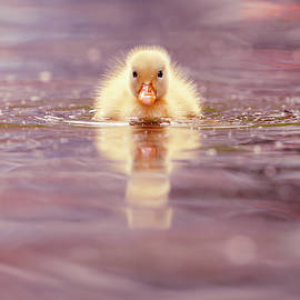 Cute Overload Series - Yellow Duckling II by Roeselien Raimond