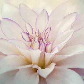 Dahlia Splendor 2 by Terry Davis
