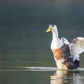 Yazir Zubair - Duck