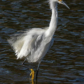Egret in the Wind by Bruce Frye