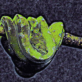 Coiled Emerald Tree Boa by Susan Maxwell Schmidt
