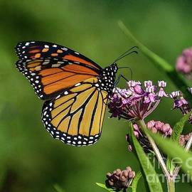 Enchanting Monarch by Cindy Treger