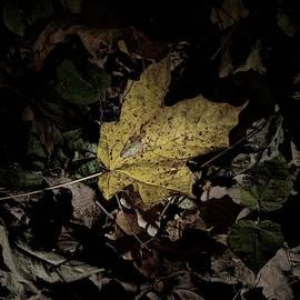 Photography by Tiwago - Fall Foliage