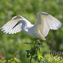 Flapping Wings by Michelle Tinger
