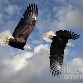 Fly Like An Eagle by Bob Christopher