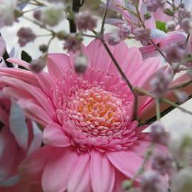 Gerbera pink flower by Ranim Asfahani