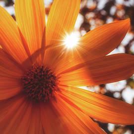 Glowing Petals by Jim Love