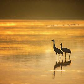 Golden morning by Liran Eisenberg
