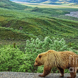 Grizzly Bear by Robert Bales